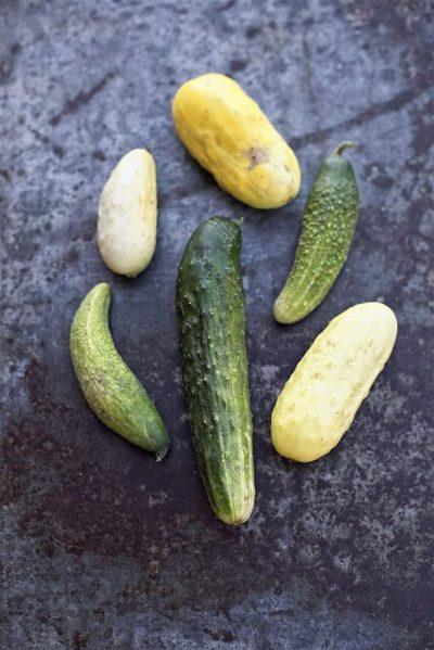 MATLUST - Food Jewels